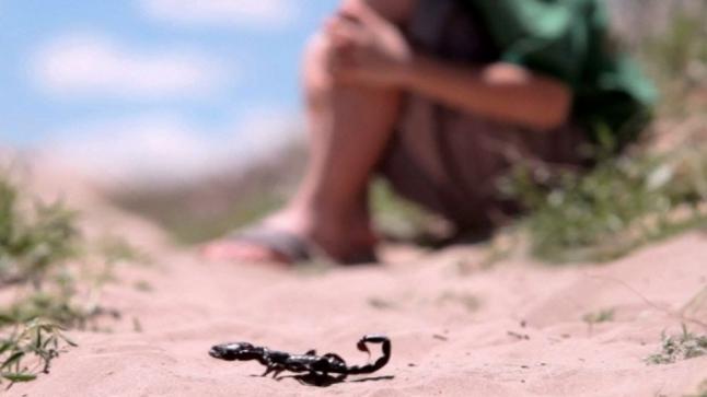 بعد إرتفاع ضحايا لسعات العقارب…الجمعية المغربية تطالب بتوحيد النضال لحماية حق الأطفال في الحياة