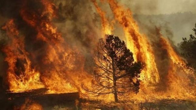 بالفيديو…النيران تلتهم 40 هكتارا من الغطاء الغابوي ضواحي تطوان