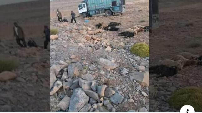 بالصور…مقتل شخصين وإصابة آخرين في حادث انقلاب شاحنة مُحملة بالأكباش بنواحي أزيلال