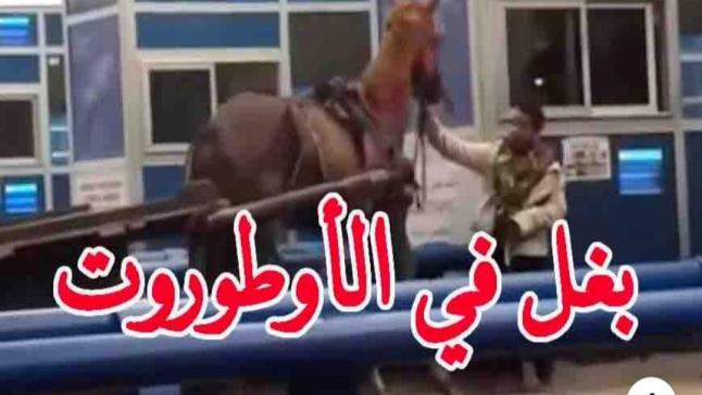 """في المغرب فقط : كروسة و بغل في """"البياج"""" ديال الأوطوروت"""