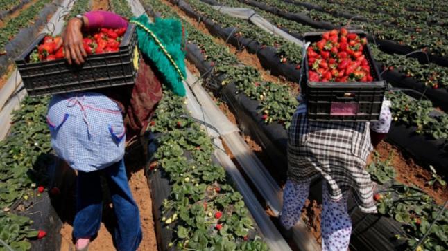 """المغرب وإسبانيا يؤكدان على الحصيلة """"الإيجابية"""" لعملية تسفير العمال"""