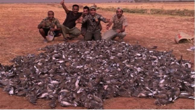 مجزرة الطيور تطيح برؤوس كبيرة في الوزارة أخنوش