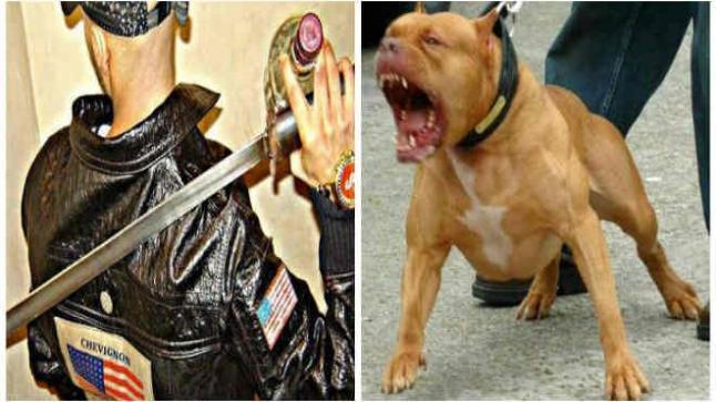 شخص يهاجم الشرطة بكلب شرس ويشهر سيفه في مواجهات عنيفة بطنحة